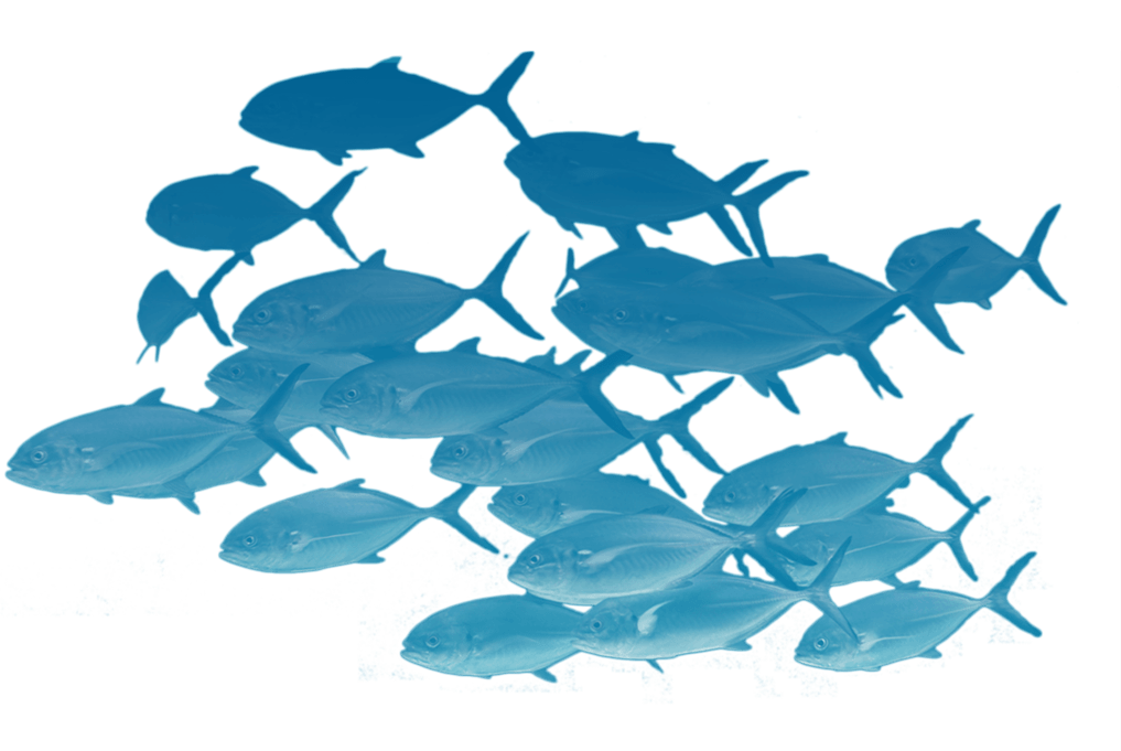 School Of Fishes Png
